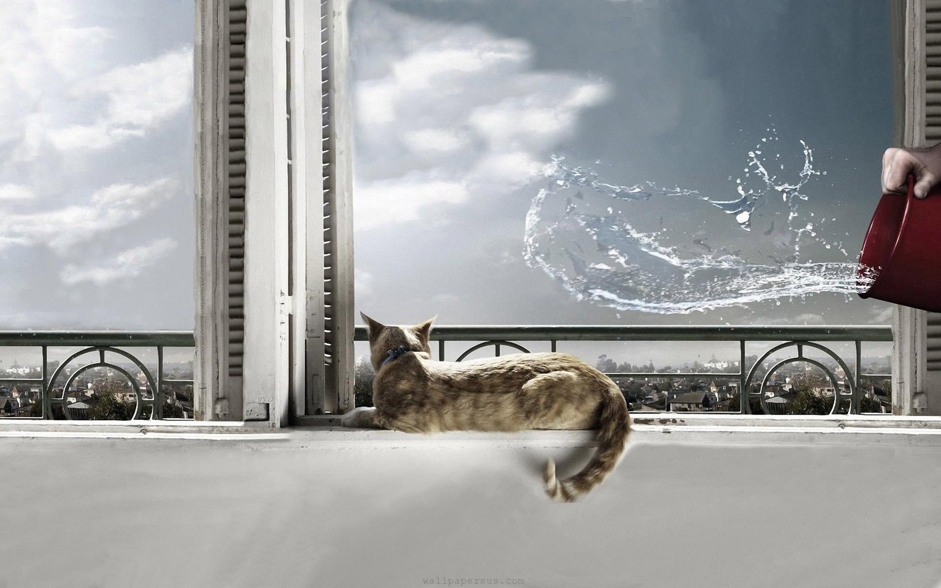Gato despistado